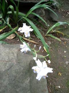 お茶席の花.jpg