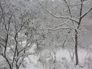 杜の音 28年1月 雪景色.jpg
