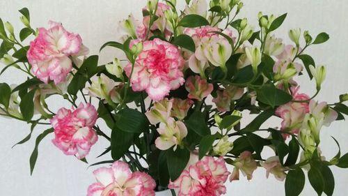 今泉の花.jpg